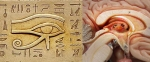 Oeil d'Horus Glande pinéale